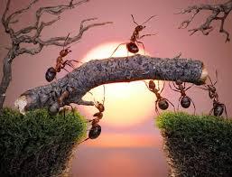 diệt kiến